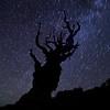 Falling Stars, Bristlecone Pine Forest