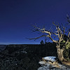 Light Painted Tree on the South Rim of the Grand Canyon