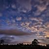 Venus, Saturn and Jupiter visible in the pre-dawn sky above Babcock Wildlife Management Area near Punta Gorda, Florida