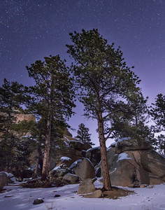 Ponderosa Pines at Night-1