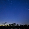 Geminid Meteor Shower around 2 a.m. in Babcock Wildlife Management Area, Punta Gorda, Florida