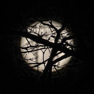 Moonlight magic!