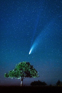 Apple Tree & Comet NEOWISE