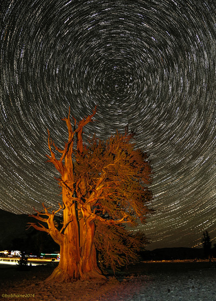 Star Trails Over Bristlecone Pine, No. 2