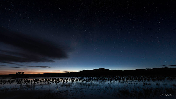 Twilight At The Pond