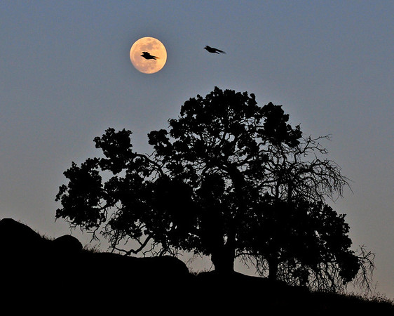 """""""Moon Flight"""".  The Eve of the Supermoon. 5/4/12<br /> Published and featured as """"Approver's Choice/Editors Pick"""" on  <a href=""""http://www.WeatherUnderground.com"""">http://www.WeatherUnderground.com</a>"""