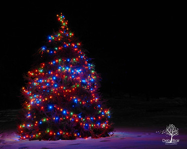 The Peterborough, NH Town Christmas Tree in Putnam Park, Peterborough, NH