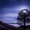 Lone Pine Night 11 x 14