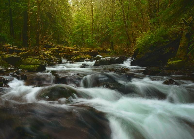 The Coastal Forests - Oregon