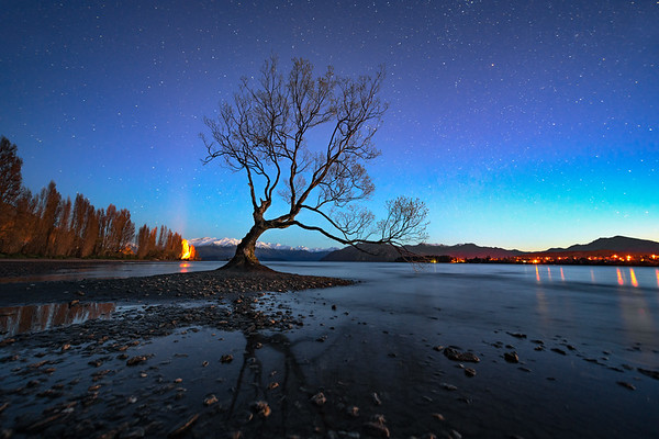 A Willow for the Stars || Lake Wanaka