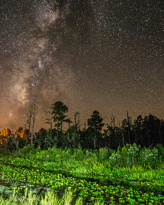 Light Painting Stephen C Foster Okefenokee Swamp