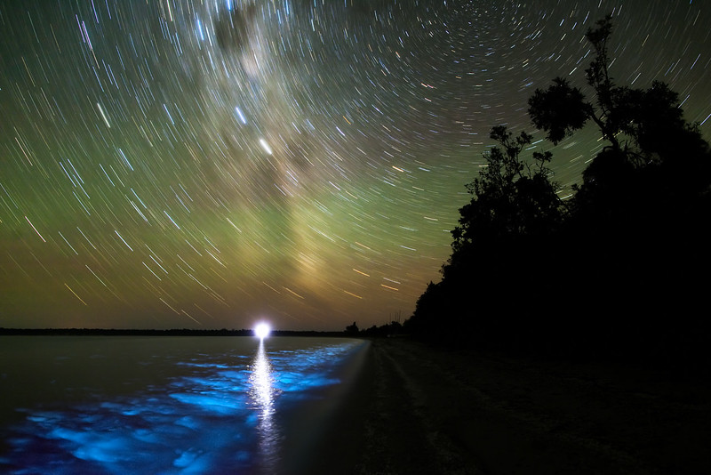 Lake Victoria Star Trails and Bioluminescence