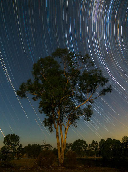 Star trails over Gum Tree