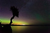 Aurora Shines on the Spirit Tree <br /> <br /> Grand Portage Indian Reservation <br /> Grand Portage, Minnesota <br /> (5II2-00807)
