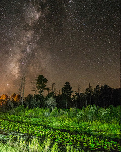 Stephen Foster State Park during Perseids Meteor Shower 2013