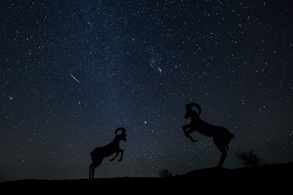 Geminid Meteors | Borrego Springs | California