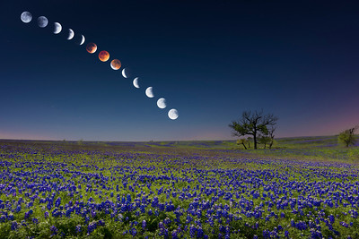 The lunar eclipse over a bluebonnet field in Ennis, Texas on April 15, 2014.