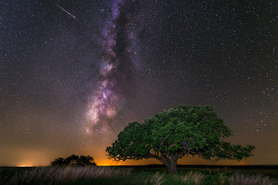 The Milky Way and meteor over a tree at the Texas State Historic Park of Fort Griffin in Albany, Texas.