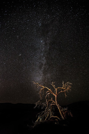 Mesquite Tree | Andromeda Galaxy | Death Valley National Park