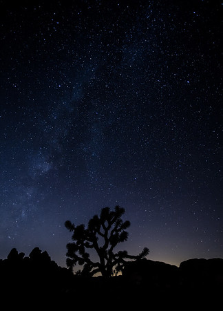 Milky Way | Joshua Tree National Park | California