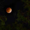 Lunar Eclipse | California