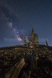 Mother Nature meets Father Time under the stars at the Ancient Bristlecone Pine Forest in the Inyo National Forest
