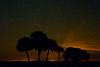 NightSky-KissimmeePrairieStateParkFl-3-21-17-SJS-017