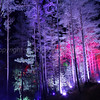 Enchanted Forest - Pitlochry