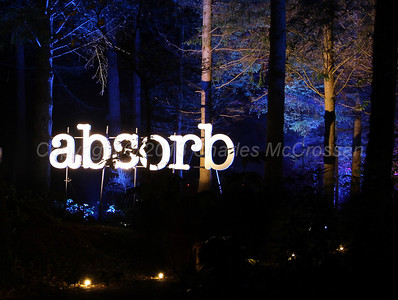 Enchanted Forest - Pitlochry, 2013