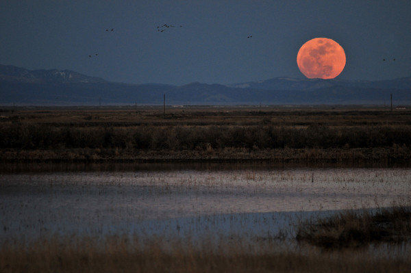 Full Moon on the Monte Vista Wildflife Refuge