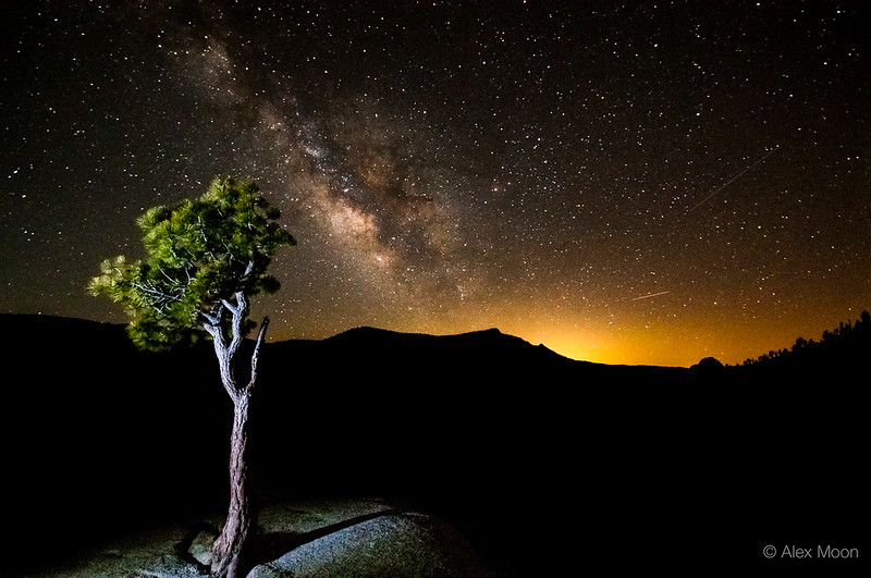Pine and Milky Way