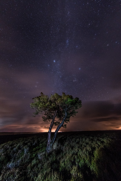 Lone Tree & Milkyway