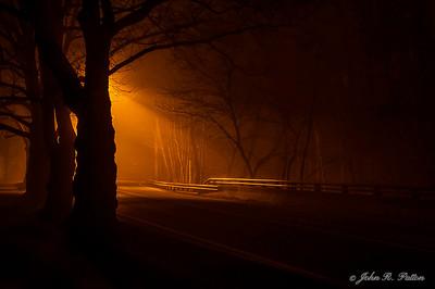 Trees along street at night