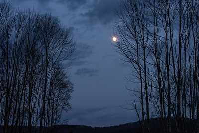 Moon with Ash Trees