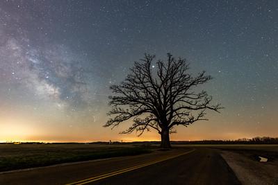 McBaine Oak under the Stars