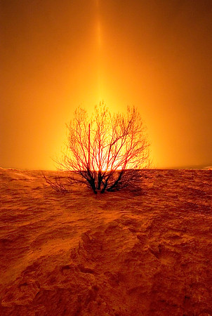 A Burning Bush