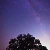 stars oak tree-0898