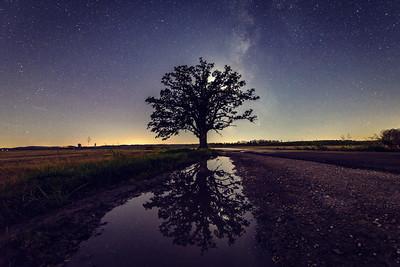 McBaine Oak - Night Reflections
