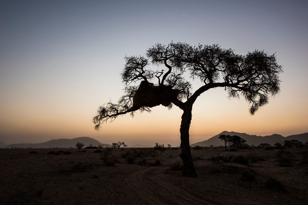 Sunset in the Namib