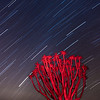 Quiver Tree Star Trails