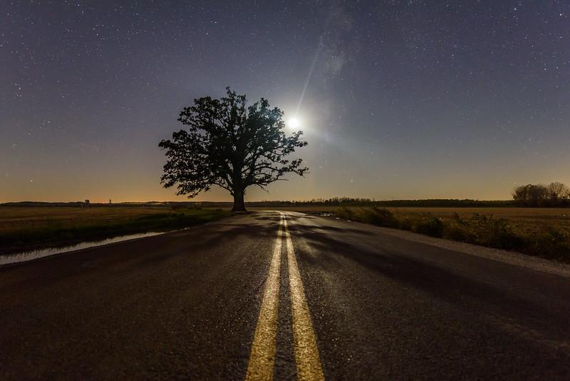 Burr Oak under the Stars