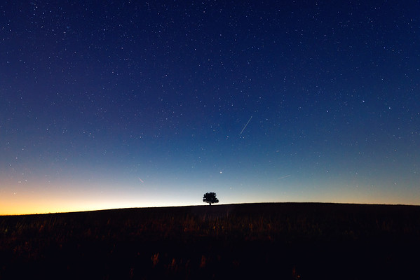 Lone Tree in Kansas