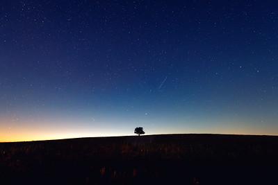Lone Tree in Kansas
