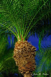Tree. Night. Vero Beach. Florida. USA.