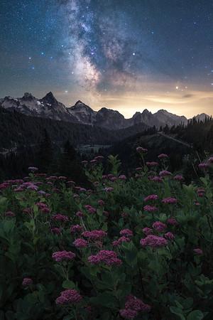 The night sky above the Tatoosh Range and wildflowers, Washington