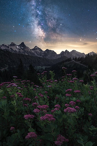 The night sky above the Tatoosh Range and wildflowers, Washington