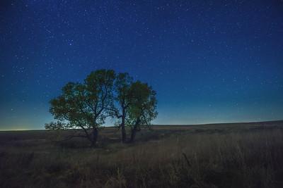 Flint Hills - Trees under the Stars