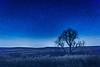 Flint Hills - Lone Tree Under Stars