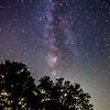 stars oak tree-0882