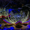 Lotus Flowers in Holiday Lights